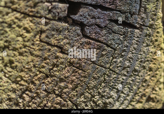 Cracked and fissured piece of old wood. Visual metaphor for old age, cracks appearing, splitting, etc. - Stock Image