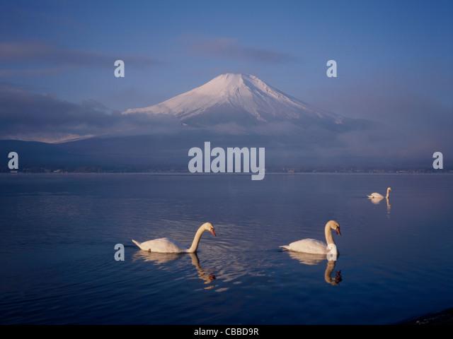 Mount Fuji and Three Swans on Lake Yamanaka, Yamanakako, Yamanashi, Japan - Stock Image