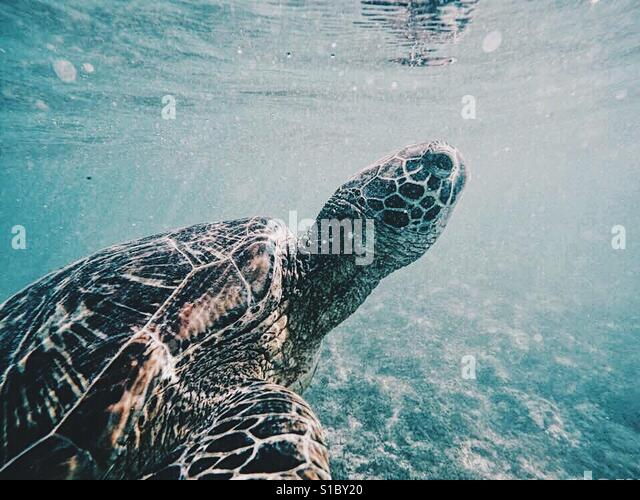 What are you looking at mr turtle? - Stock-Bilder
