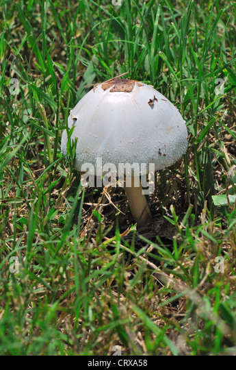 how to kill mushrooms growing in lawn