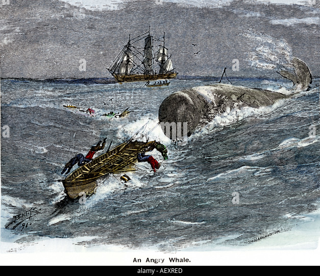 Sperm whale hunting in 1800s