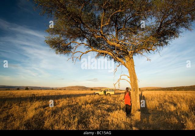 Maasai warrior by lone tree - Masai Mara National Reserve, Kenya - Stock Image