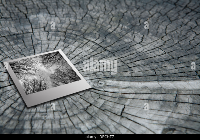 Polaroid films on the growth ring - Stock Image