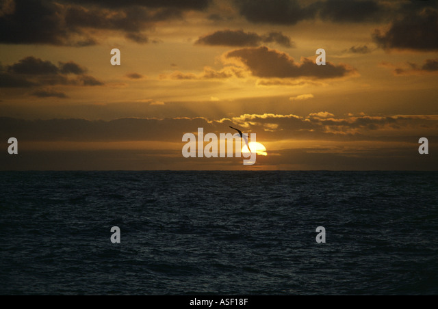 Albatross soaring in front of setting sun over open ocean Southern Ocean Real photo totally unaltered Genuine  - Stock Image