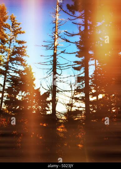 Tree in woods - Stock Image