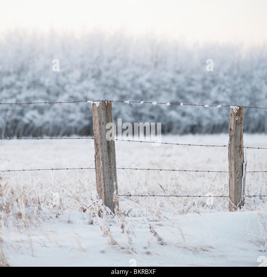 Winnipeg, Manitoba, Canada; A Snow Covered Field And Fence - Stock Image
