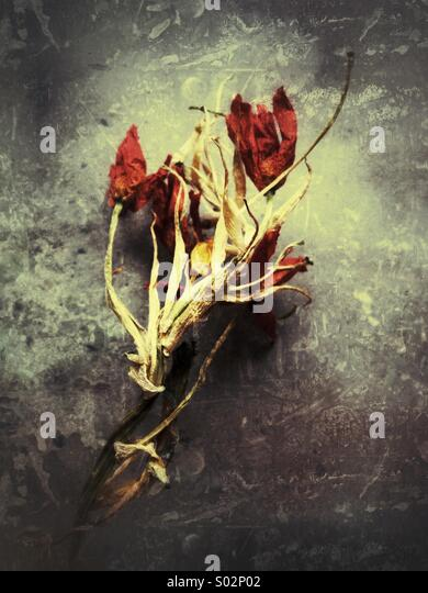 Decayed flowers - Stock Image