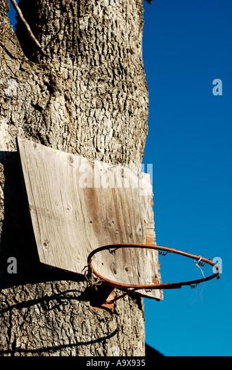 Makeshift basketball hoop nailed on tree - Stock Image