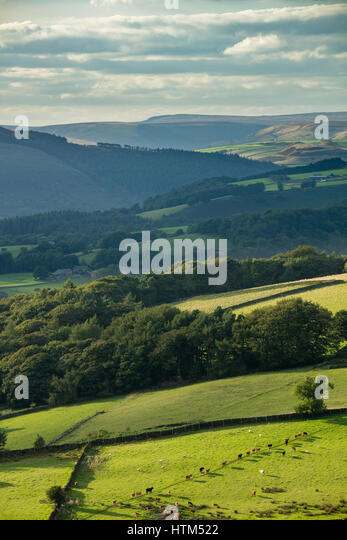 Cattle at Callow Bank & Stanage Edge from Millstone Edge, nr Hathersage, Derbyshire Peaks District National - Stock Image