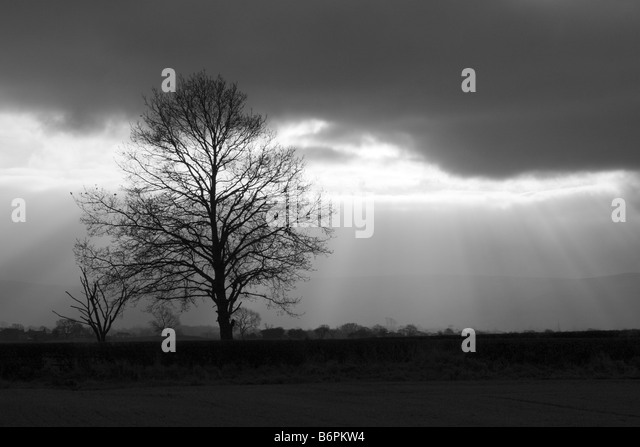 Winter scene near Easby, North Yorkshire - Stock Image