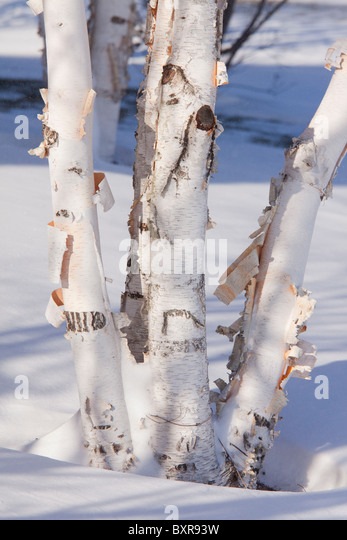Birch Bark Canoe Stock Photos Amp Birch Bark Canoe Stock
