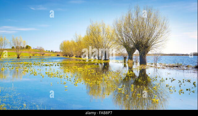 Spring landscape, Biebrza National Park, Poland - Stock Image
