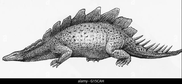 Illustration of a stegosaurus. - Stock Image