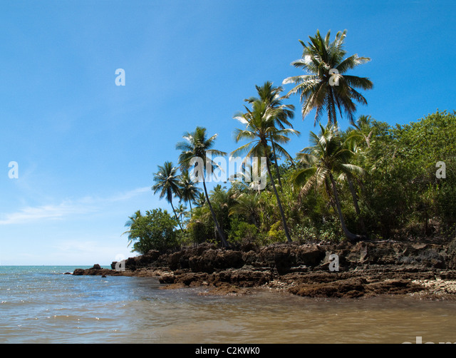 Palm trees on Boipeba Island, Bahia, Brazil - Stock Image