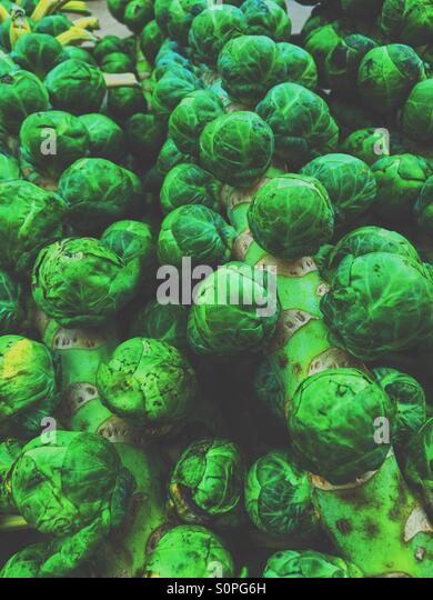 Lots of sprouts - Stock Image