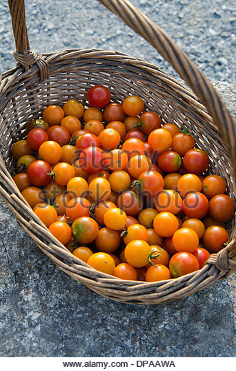 Basket of fresh picked summer cherry tomatoes on granite stone background. - Stock Image