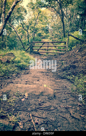A muddy tropical jungle trail leading to a gate in the distance. - Stock-Bilder