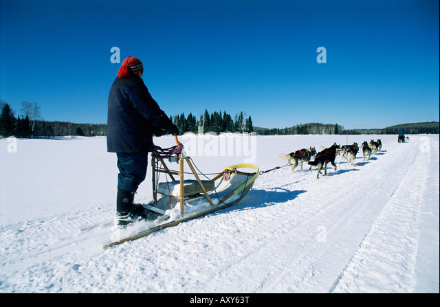 Dog team drawing sledge, Quebec, Canada, North America - Stock Image