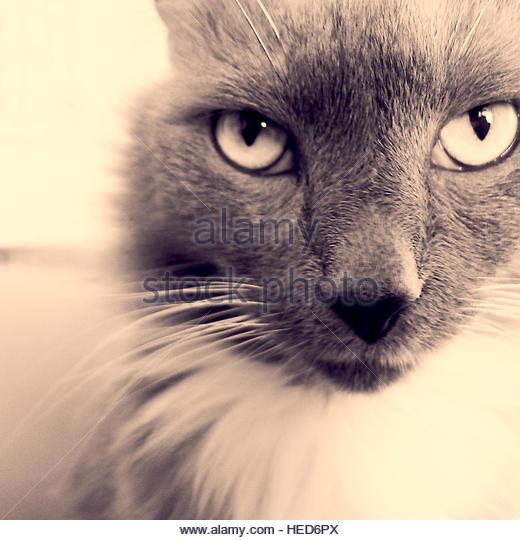 Cat - Stock-Bilder