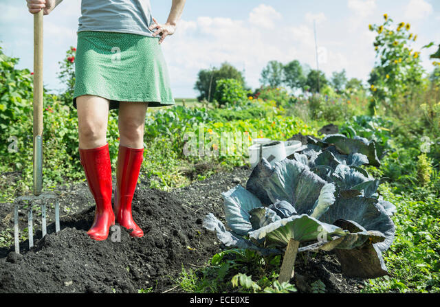 Woman vegetable garden fork harvest gumboots - Stock Image