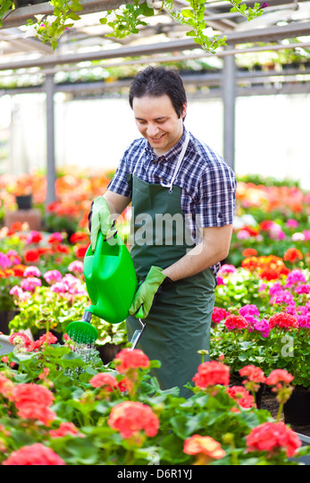 Portrait of a greenhouse worker watering plants - Stock Image