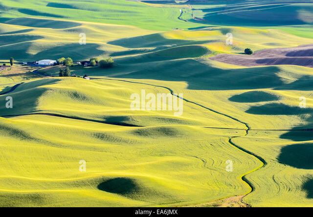 USA, Washington, Palouse, Landscape in sunset - Stock Image