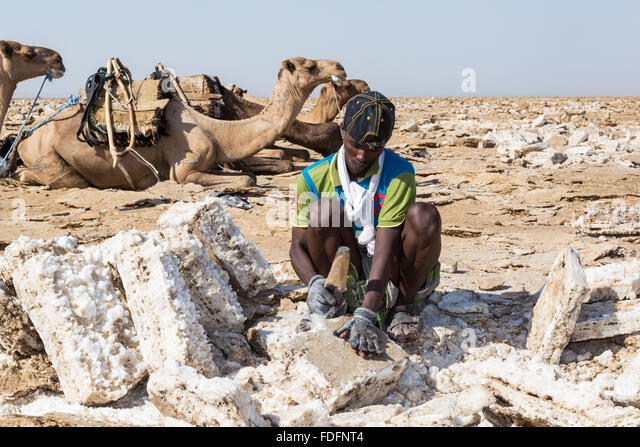 A man uses a simple hand-axe to shape blocks of salt near Dallol in Ethiopia. These blocks are loaded onto camels - Stock Image