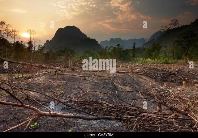 Slash and burn deforestation near Vang Vieng, Laos, March 2009. - Stock Image