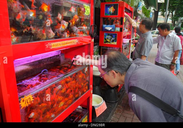 Hong Kong China Kowloon Prince Edward Tung Choi Street Goldfish Market Asian man looking tank selecting sale display - Stock Image
