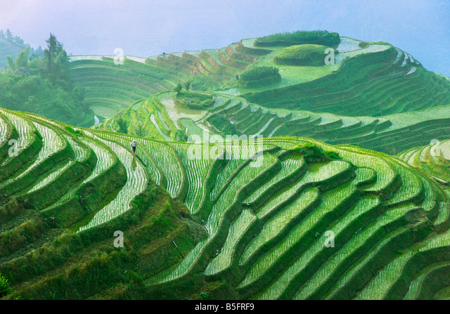 Landscape of rice terraces Longsheng Guangxi China - Stock Image