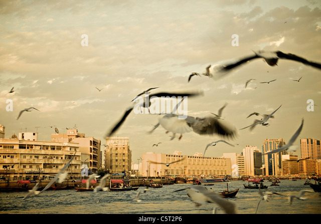 United Arab Emirates, Dubai, seagulls at Dubai Creek - Stock Image