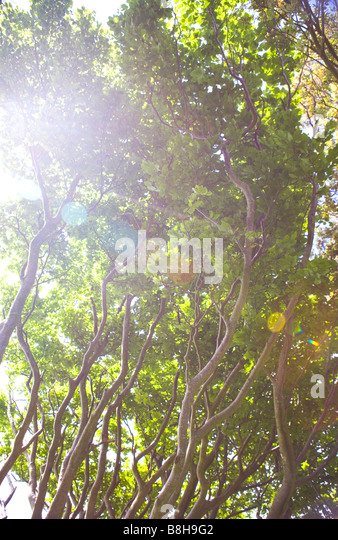 Sun through tree branches - Stock Image