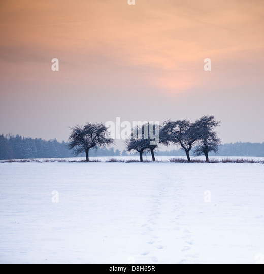 Trees at the edge of the field in winter - Stock Image