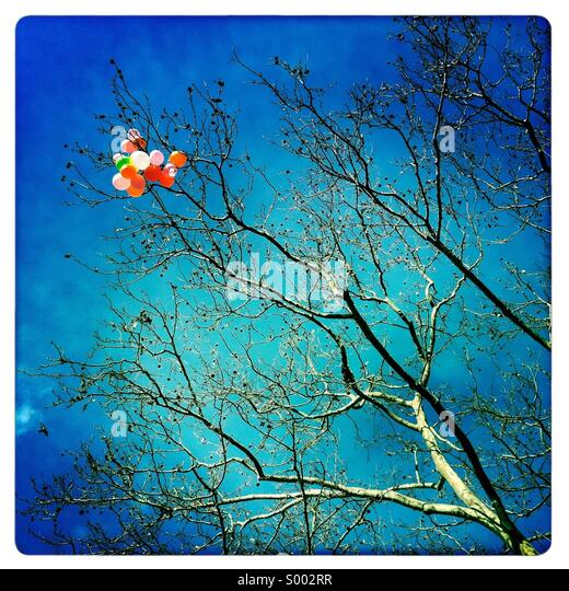 Colorful bunch of balloons stuck in tree branches - Stock Image