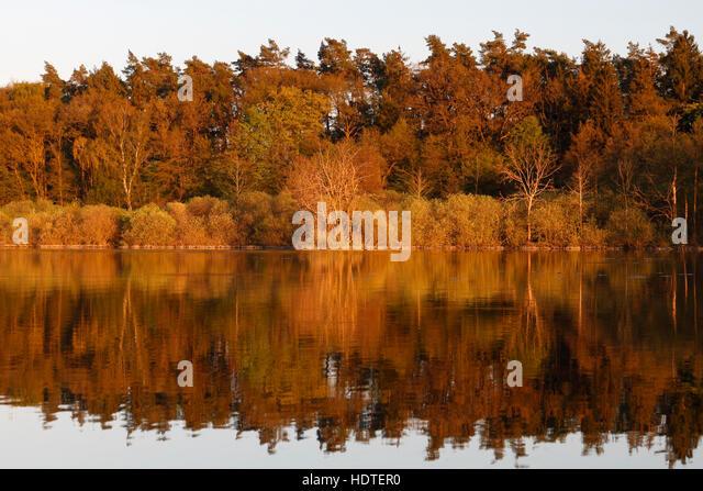 River marsh, River Peene, Peenetal Nature Park, Mecklenburg-Western Pomerania, Germany - Stock Image