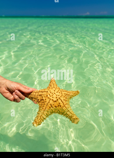 Dominican Republic Punta Cana, Bavaro Beach, hand holding starfish against a green colored sea and blue sky - Stock Image