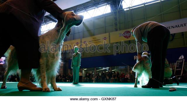Stratford Park Dog Show  November