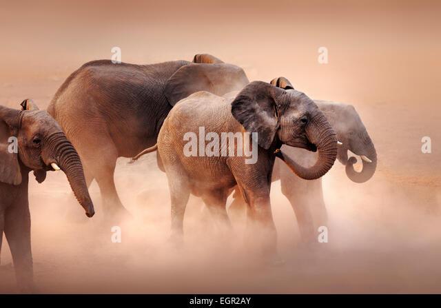 Disturbed elephants (Loxodonta africana) stirring dust in desert - Etosha National Park (Namibia) - Stock Image