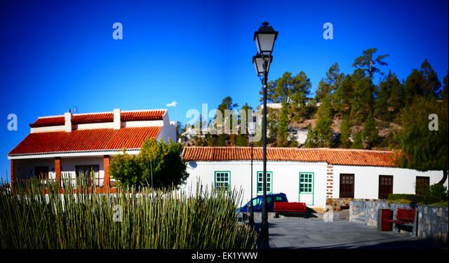 Spain Canary islands Tenerife nature plant of Vilaflor village - Stock-Bilder