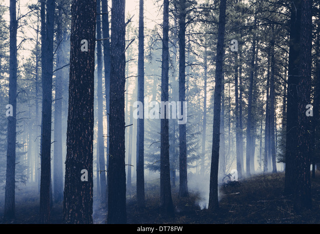 A controlled forest burn, sustainable forest ecosystem for regrowth - Stock Image