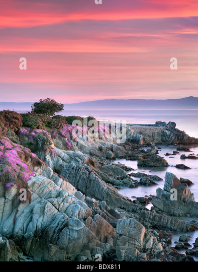 Sunrise and purple ice plant blossoms and ocean. Pacific Grove, California - Stock Image