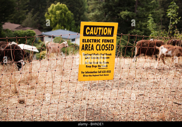 An electric fence caution sign and goats and sheep grazing as a fire prevention measure, Tilden Regional Park, Berkeley, - Stock Image