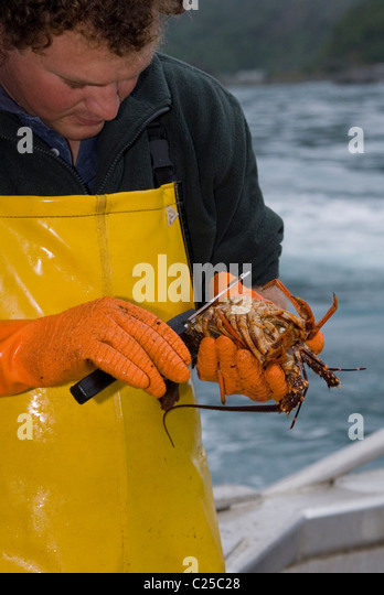 how to set up rock lobster pots in south australia