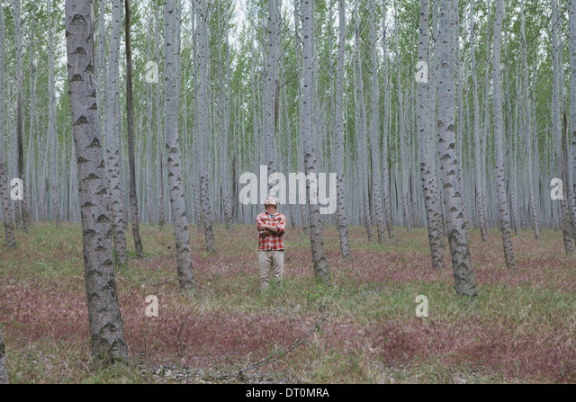 Oregon USA man in forest of poplar trees Oregon USA - Stock Image