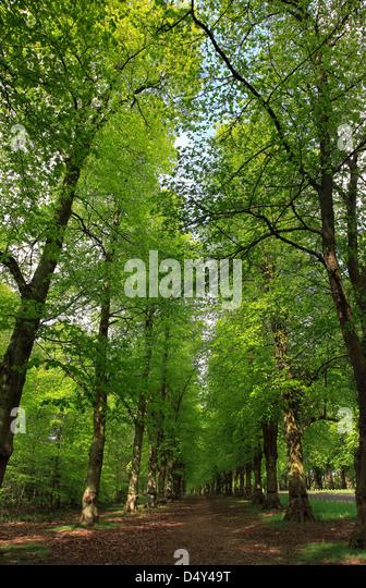 spring green three trees - photo #33