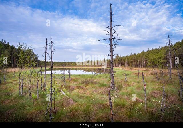 Scenic landscape from mire at summer morning in National Park, Liesjärvi, Finland. - Stock Image