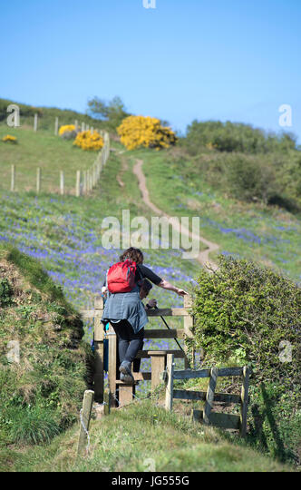 Female hiker on the South West Coast Path near Boscastle in Cornwall, England, UK - Stock Image