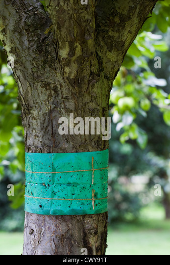 Moth trap stock photos moth trap stock images alamy for Tree trunk uses
