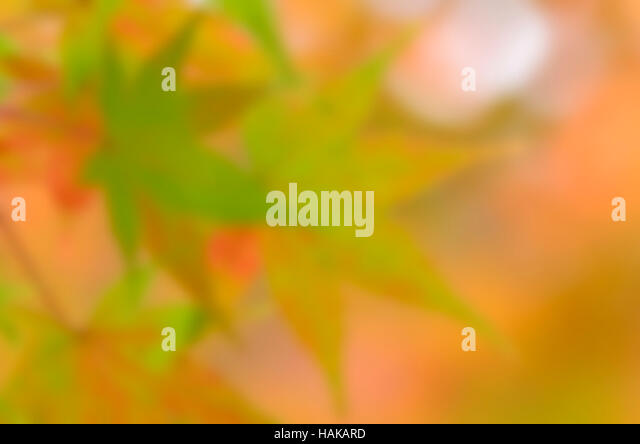 Blurred autumn color tone background. - Stock Image