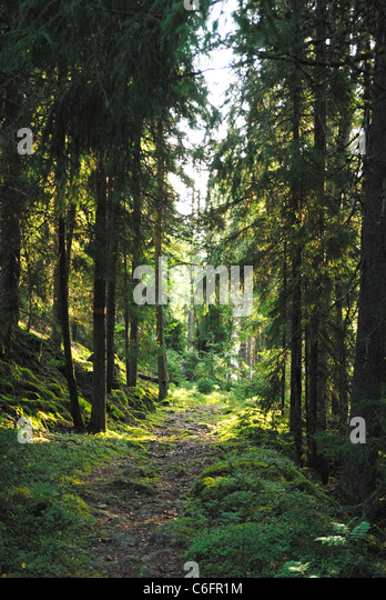 A forest glade in the wilderness of Malingsbo-Kloten Nature Reserve, Sweden - Stock Image